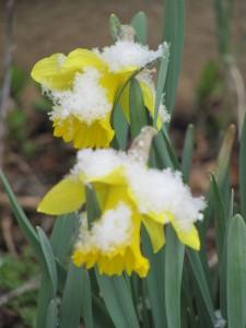 snow flowers photo by Anna Ralph